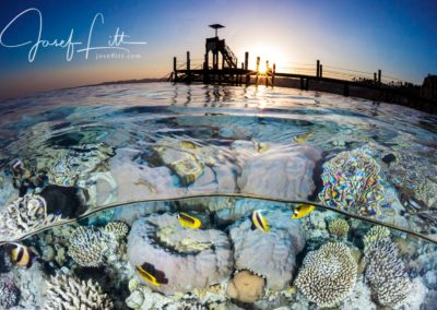 Fish on a coral reef under a jetty at sunset, Ras Umm Sid, Egypt © Josef Litt