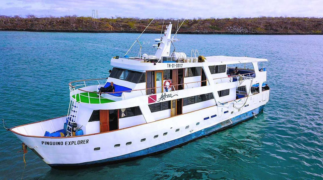 Galapagos Diving Expedition aboard Pingüino Explorer