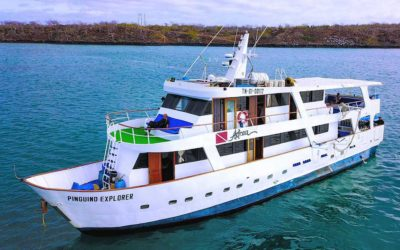 Sold Out: Galapagos Diving Expedition aboard Pingüino Explorer