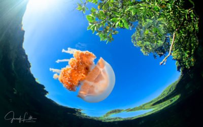 Gallery of Palau Photographs