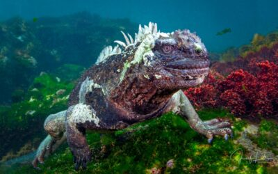 Gallery of Underwater Photographs from the Galapagos