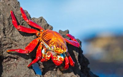 Gallery of Galapagos Photographs